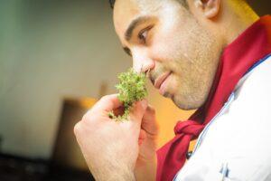Tutti pazzi per le erbe aromatiche!